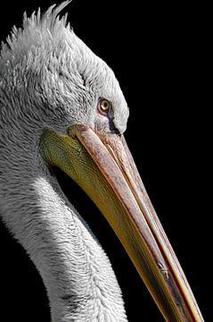 Porträt eines Pelikans von Richard Guijt Photography