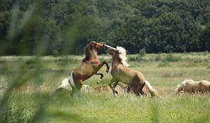 Spelende paarden van Esther Leijten-Kupers