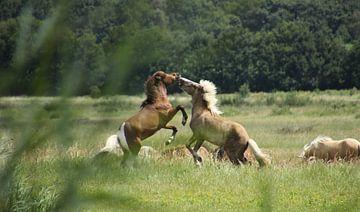 Spielende Pferde von Esther Leijten-Kupers
