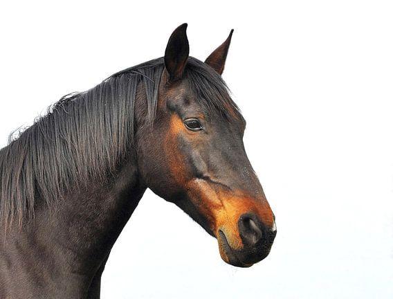 Paardenhoofd.