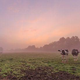 foto van een sfeervolle mistige kleurrijke zonsopkomst in een vlaams veld, een weide met koeien, Men van Krist Hooghe