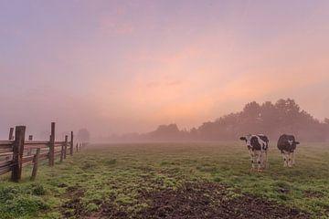 foto van een sfeervolle mistige kleurrijke zonsopkomst in een vlaams veld, een weide met koeien, Men van Fotografie Krist / Top Foto Vlaanderen