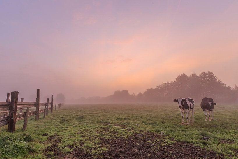 photo d'un lever de soleil coloré et brumeux dans un champ flamand, un pré avec des vaches, Menin, F sur Fotografie Krist / Top Foto Vlaanderen