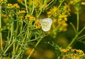 Schmetterling auf einer gelben Pflanze von Merijn Loch
