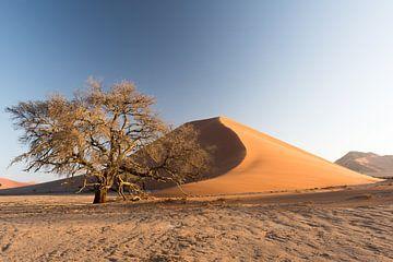 Dune 39, in sossusvlei van Felix Sedney