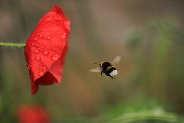Bumblebee sur Janine van Lagen