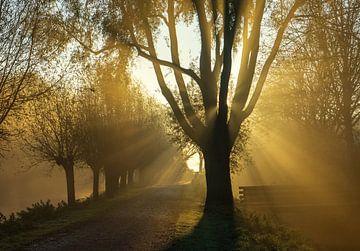 Magische Sonnenstrahlen von Amanda van den Berg / Fotografie Amanda