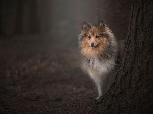 In het bos / Shetland sheepdog behind a tree in a dark fairytale forest van Elles Rijsdijk