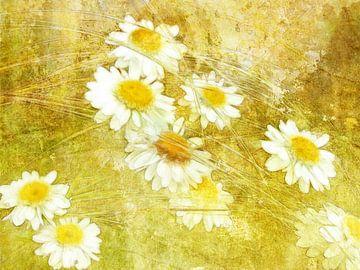 Graminées et marguerites en jaune sur Claudia Gründler