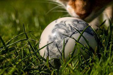 Voorzichtig snuift de kat de bal in het gras van Harald Schottner