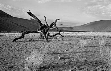 dood hout in de Namib woestijn (Sosusvlei) Namibië van Jan van Reij