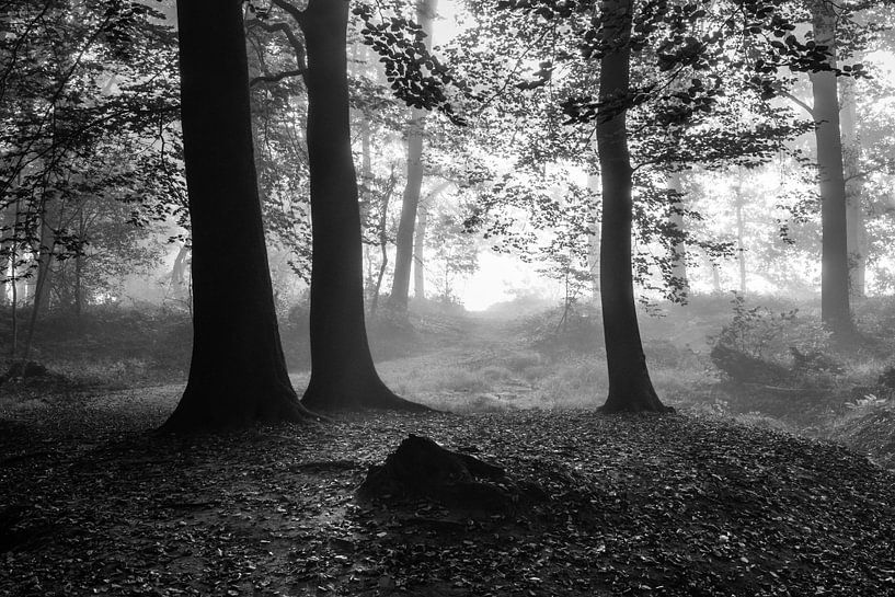 Blinding Fog Silhouettes van William Mevissen