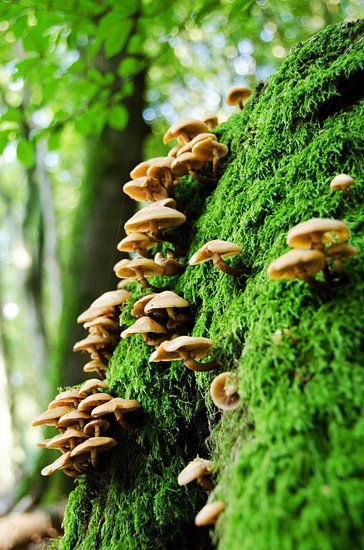 Bospaddenstoelen op mos