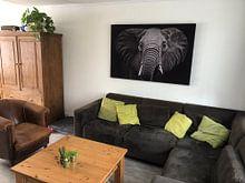 Klantfoto: Elephant van Sasha Donker, op print op doek