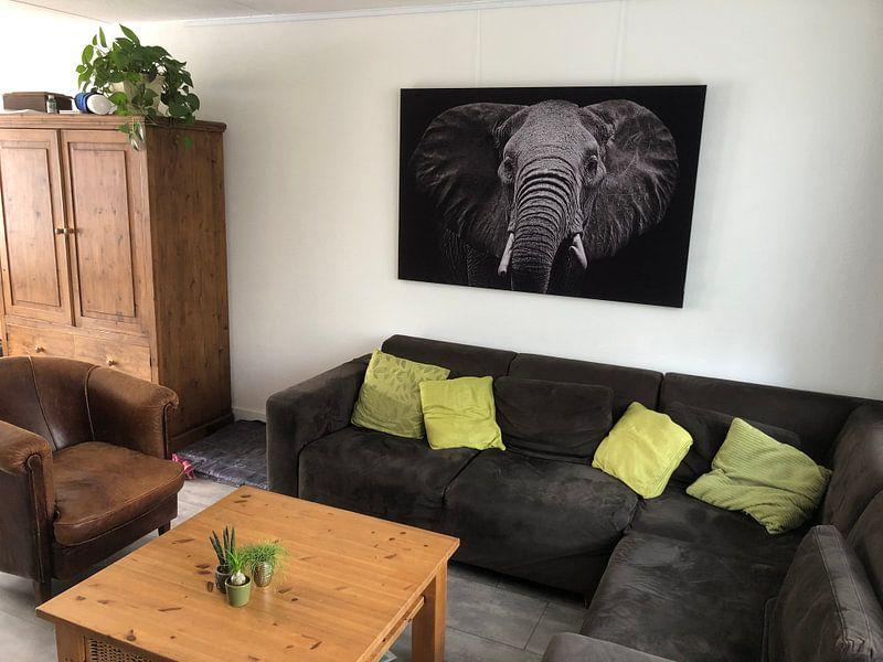 Photo de nos clients: Elephant sur Sasha Donker, sur medium_13