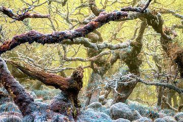 Verzauberter Waldvogel, Großbritannien von Lars van de Goor