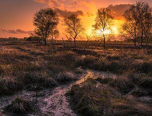 Zonsondergang op het Wierdense veld van