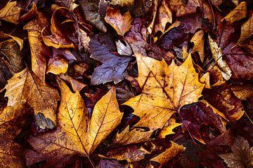 Esdoornbladeren op bruin gebladerte in winterse vergankelijkheid en dood van Dieter Walther