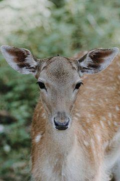 Kleines Bambi im Märchenwald von Nadine Rall