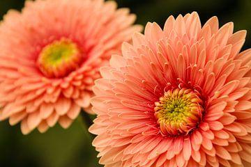 Roze bloem van Stedom Fotografie
