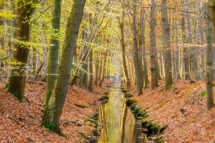 Avondlicht in het bos van Karla Leeftink