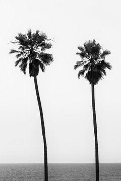 Palmbomen op het strand | Monochroom van Melanie Viola