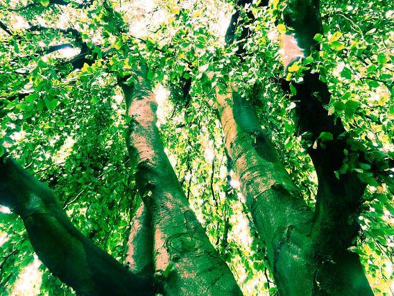 Tree Magic 10