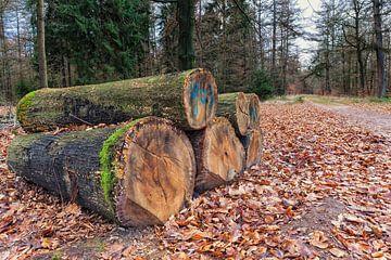 Baumstämme liegen entlang eines Waldweges in Drenthe von Evert Jan Luchies