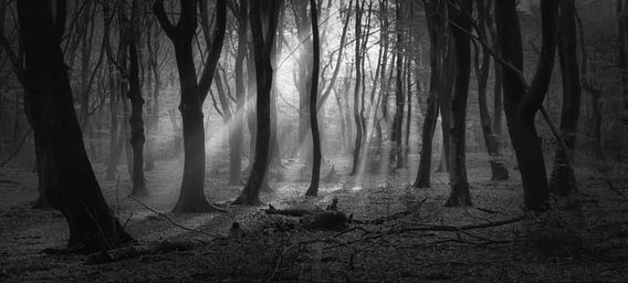 Mysterious Speulderforest.Oerbos.