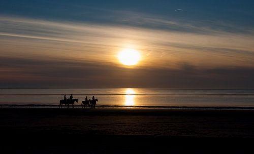 paardjes op het strand van