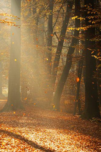 Romantischer Morgen im Wald