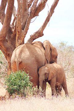 Moeder Olifant met kind van