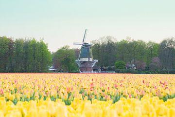 Windmolen en een veld met gele tulpen van Stefanie de Boer