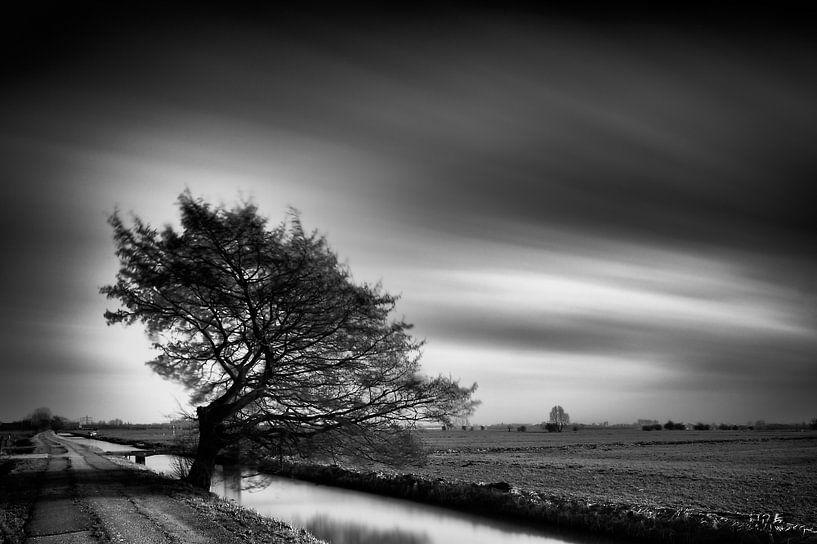 Gevormd door de wind van John Verbruggen