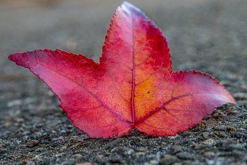 Rood blad op het asfald van Harmen Goedhart