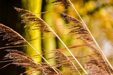 Wuivend gras van Marjo Kusters