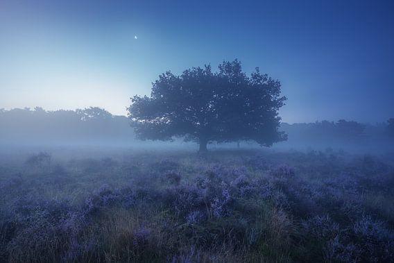 Paarse Heide Hilversum 4 van Albert Dros