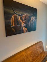 Kundenfoto: Schottischer Highlander im Abendlicht. Goldene Stunde. Schottisches Hochlandrind von Henk Van Nunen, auf leinwand