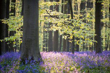 Wald von Jeroen Linnenkamp