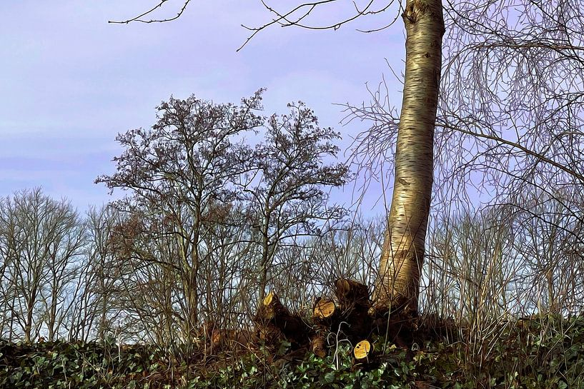 Boom in het voorjaar gesnoeide takken van ellenilli .