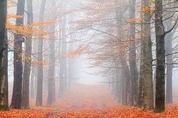 Oranje boslaan in de herfst van