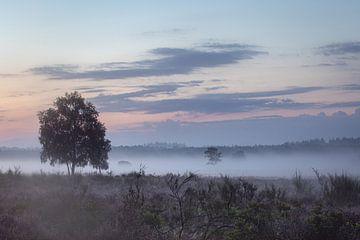 violetter Morgen von Ellen Stegeman