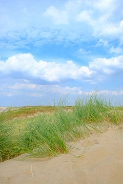 Sommer in den Dünen am Nordseestrand von Sjoerd van der Wal