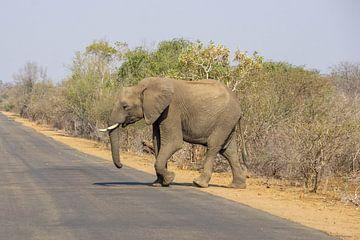 Elefant überquert die Straße in Südafrika von Reis Genie