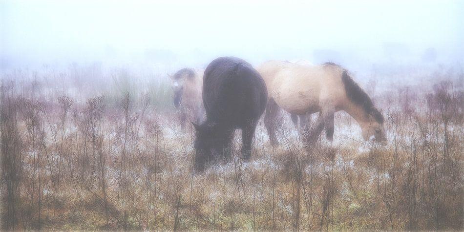 Wilde paarden in de mist ll van Rigo Meens