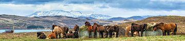 IJslandse paarden von Joke Beers-Blom