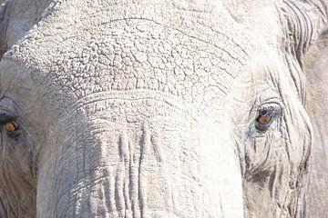 close up olifant von Daisy Janssens