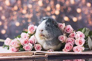 Mieps Roses