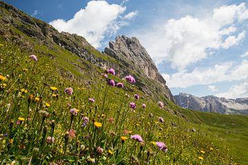 Blumenwiese im Naturpark Puez-Geisler von Rudolf Brandstätter