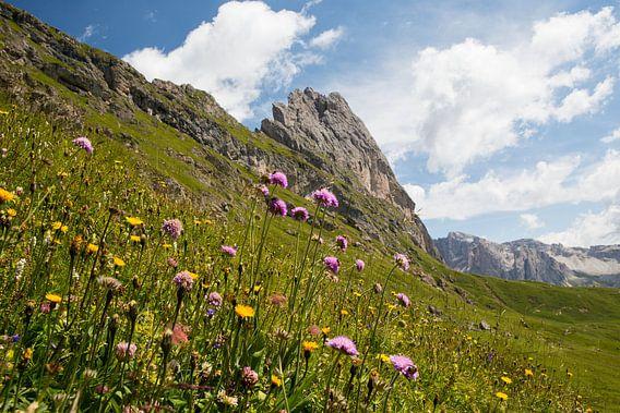 Blumenwiese im Naturpark Puez-Geisler